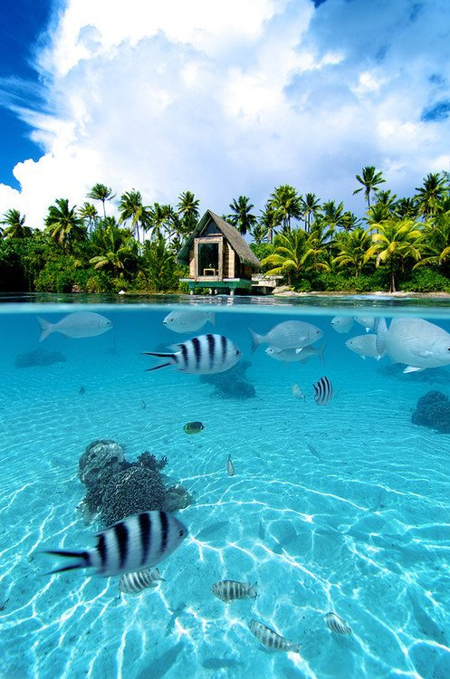 bora bora paradise 6