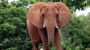 viral video thiriodis elefantas epitithete se andra otan ekinos