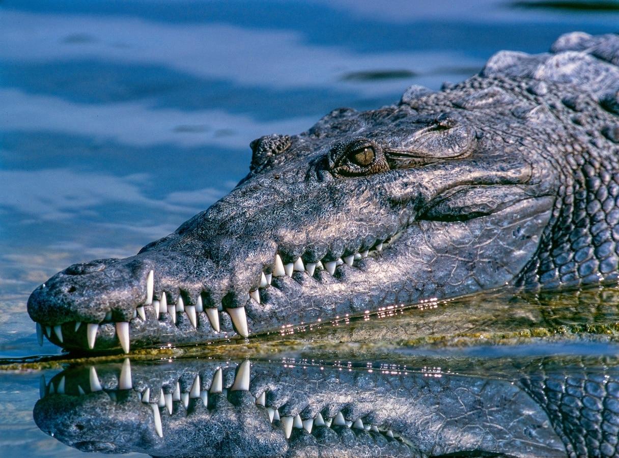 viral vinteo i apistefti machi pythona krokodilou ton katapie amasito