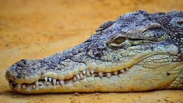 viral vinteo pedi richni avoithito koutavi se limni gemati krokodilo