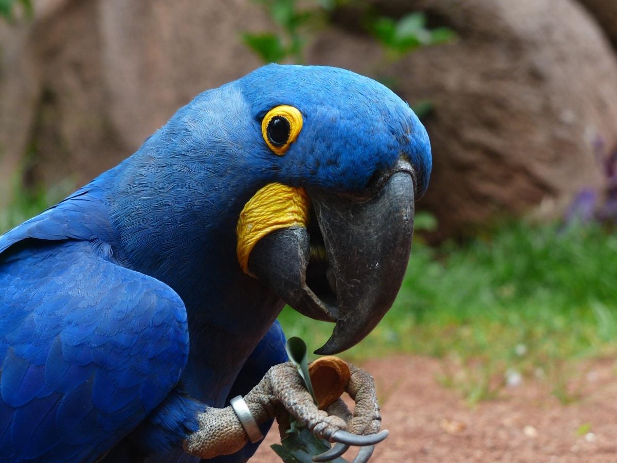 anekdoto o papagalos parangelni petreleo