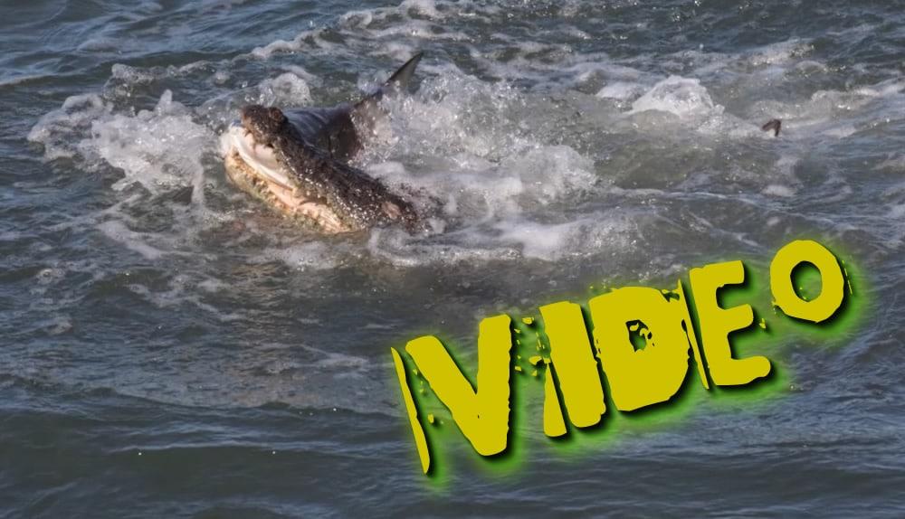 viral video krokodilos enantion karcharia stin afstralia ton ekane mia chapsia entromi i psarades