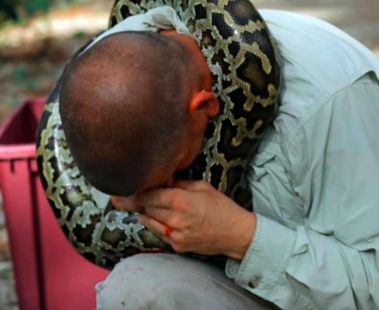 viral video o giteftis fidion egine to thyma tou terastiou pythona brosta stin kamera antechis