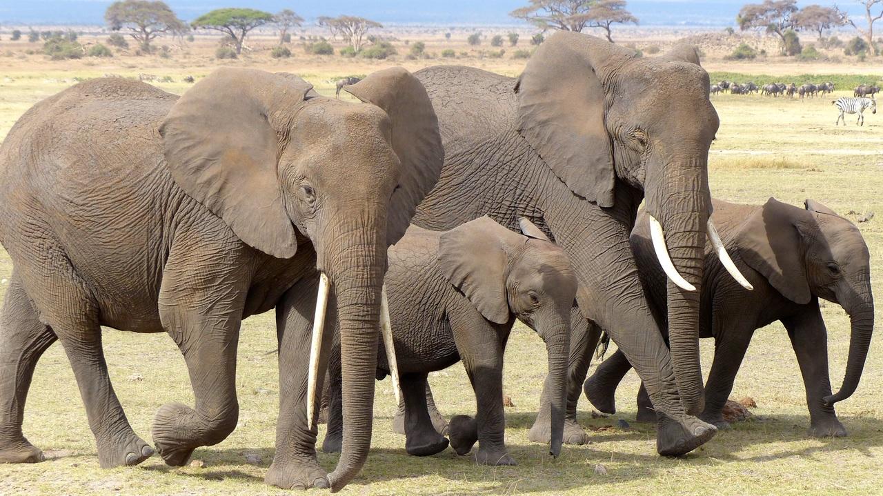 viral video tragodia stin tailandi elefantes epesan se katarrakti