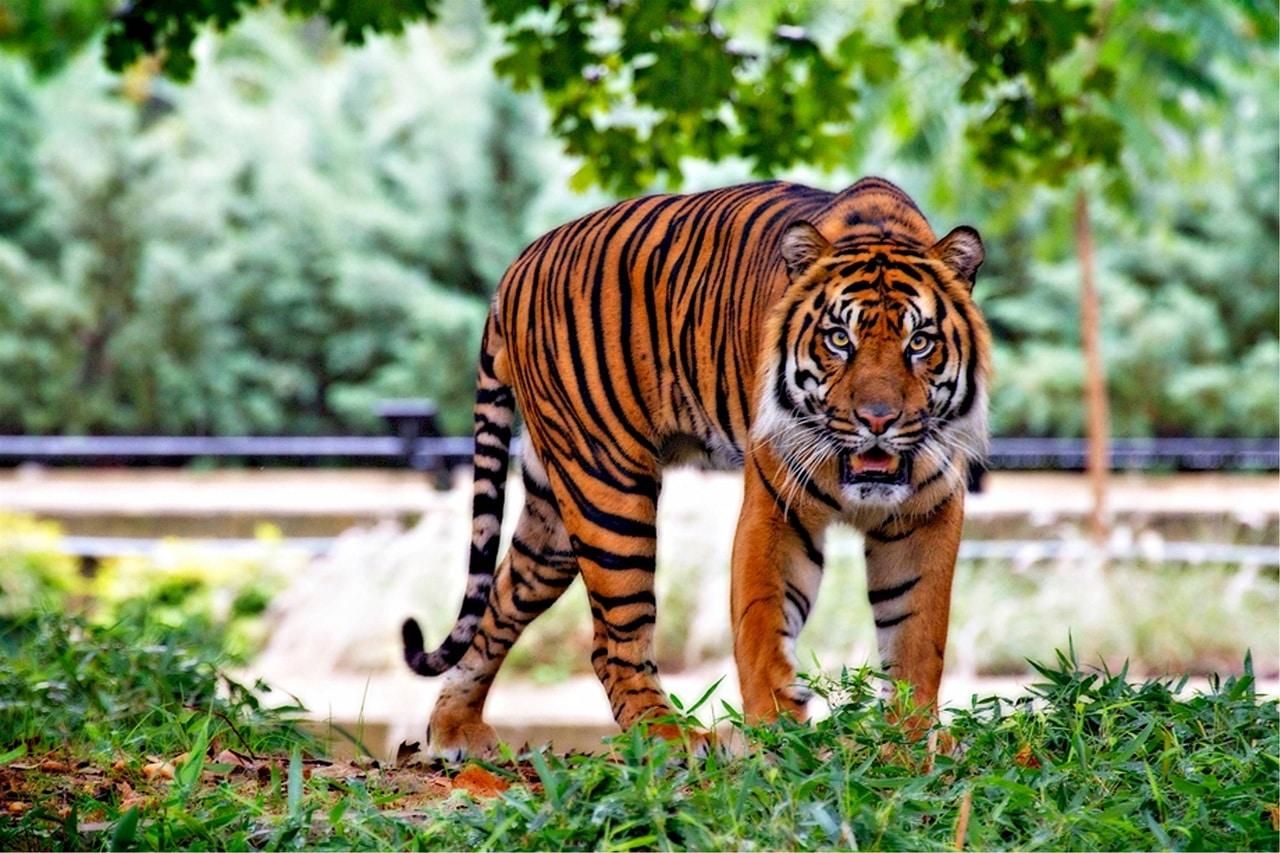 viral video tragikes stigmes se zoologiko kipo tigris katasparaxan patera brosta sta entroma pedia