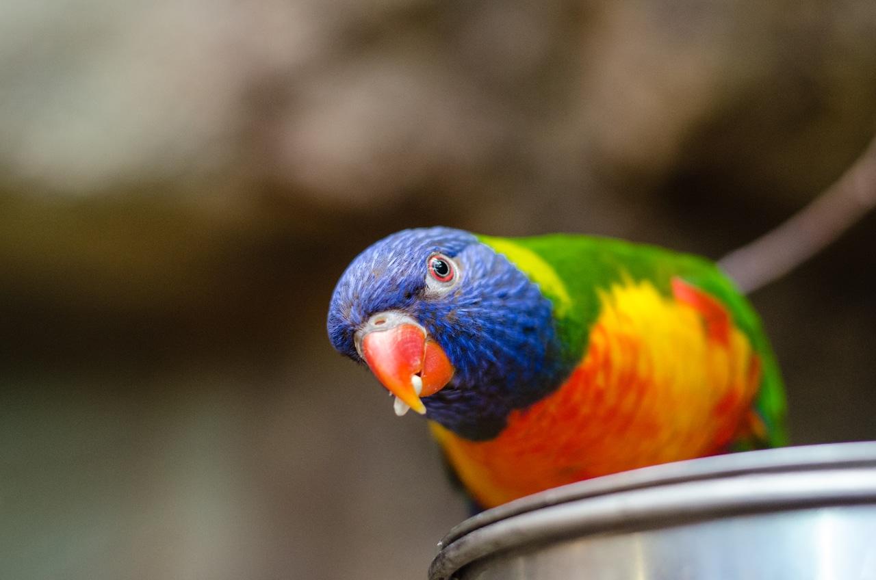 anekdoto mia matso kyria trelo milf ke i papagalina tis trelo gelio