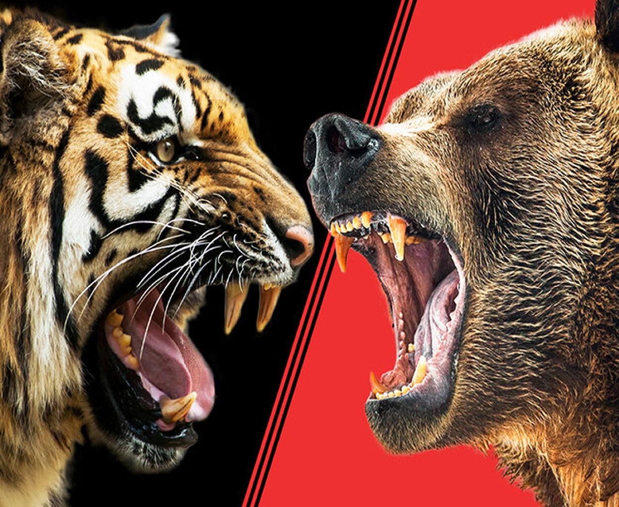 viral video epiki machi arkoudas me tigri apistefto