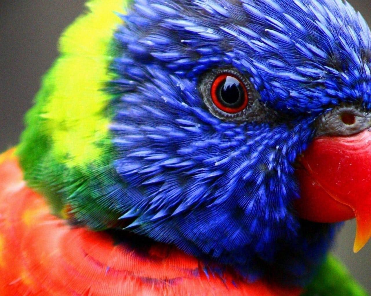 anekdoto ine enas papagalos ke enas malkas poly gelio