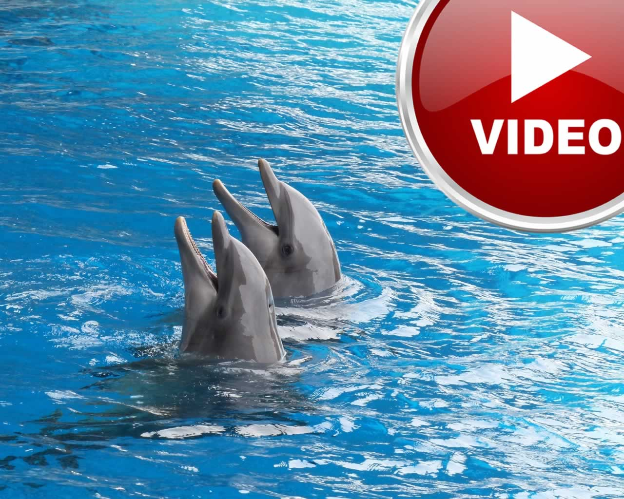 fantastiko o adonis georgiadis meta tin anaptyxi ide ke delfinia stin marina floisvou