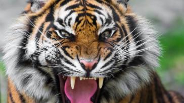 viral video agria tigris graponi motosykletisti ston dromo sygklonistikes ikones