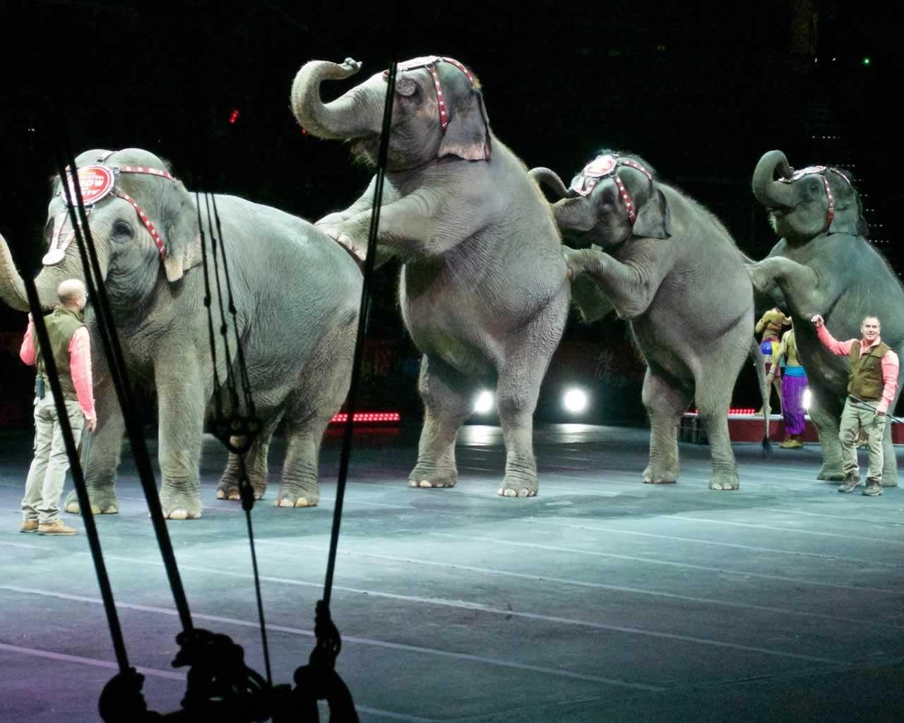 viral video elefantas se tsirko soriazete kato afto pou ekanan i ypolipi elefantes tha to thymase gia panta