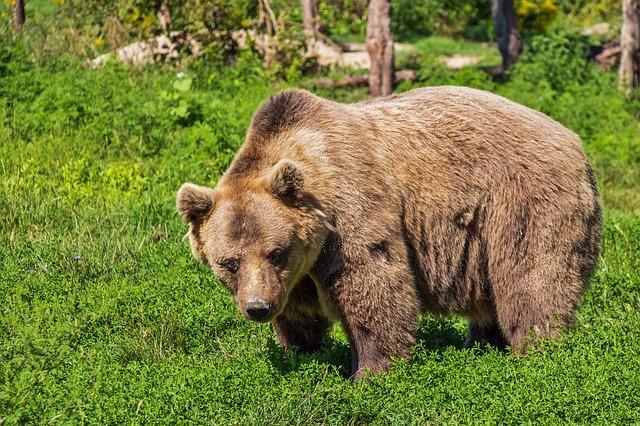 Υπάλληλος ζωολογικού κήπου παραπάτησε και έπεσε μέσα στις αρκούδες Τρομακτικό