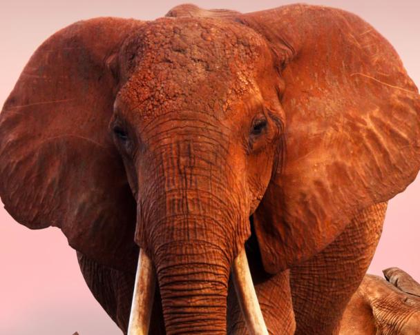 o elefantas kai to myrmigki ithelan na pane sinema