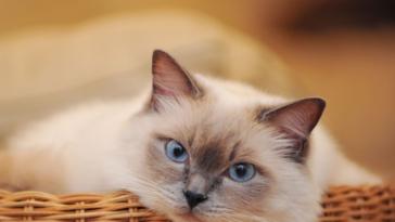 ΑΝΕΚΔΟΤΟ: Ένας παντρεμένος και η γάτα της γυναίκας του! Φοβερό γέλιο